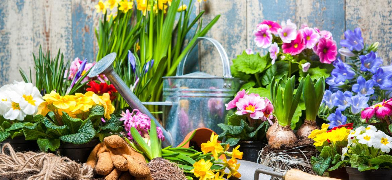 Yard full of beautiful flowers